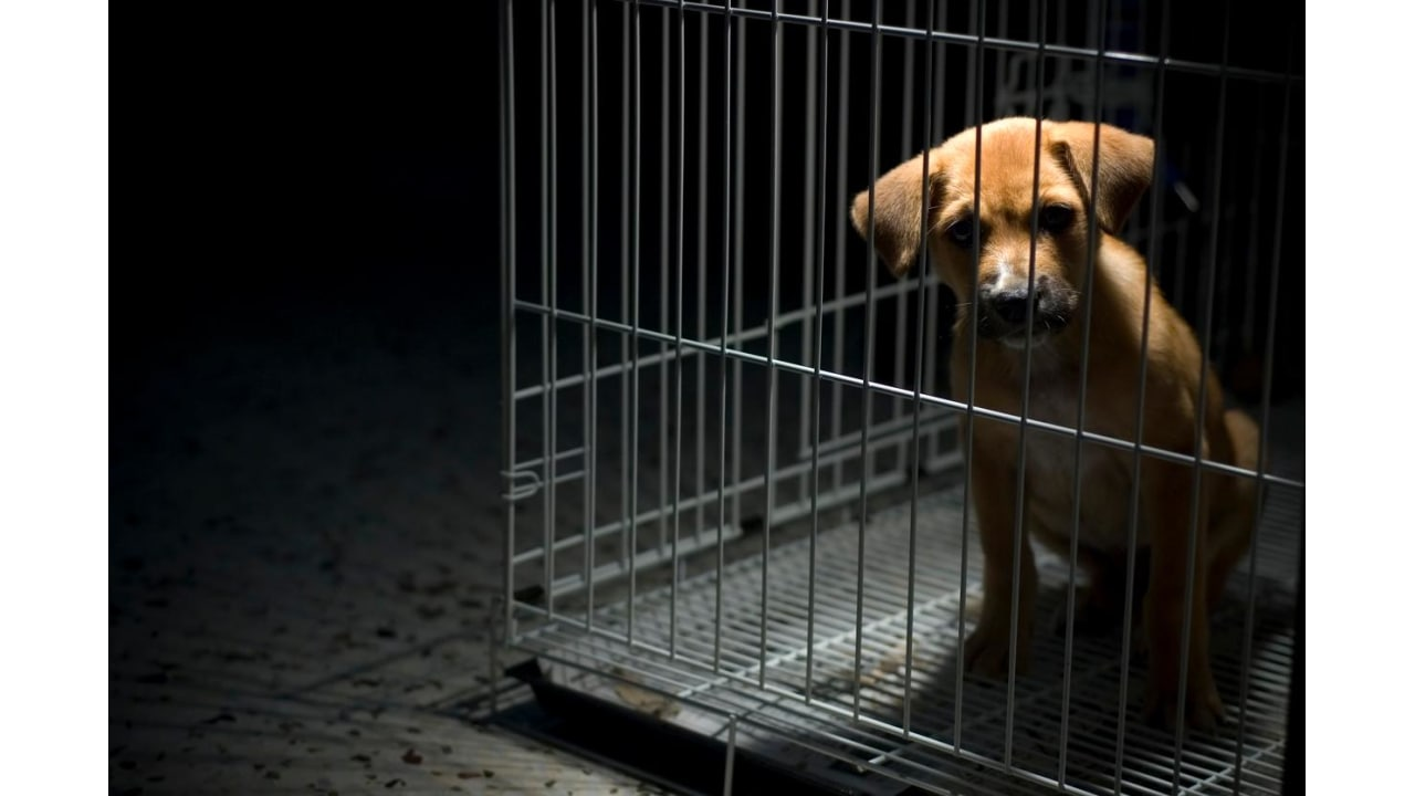 Should Animal Cruelty Be a Federal Felony? - Causes